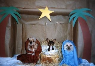 0095 Nativity